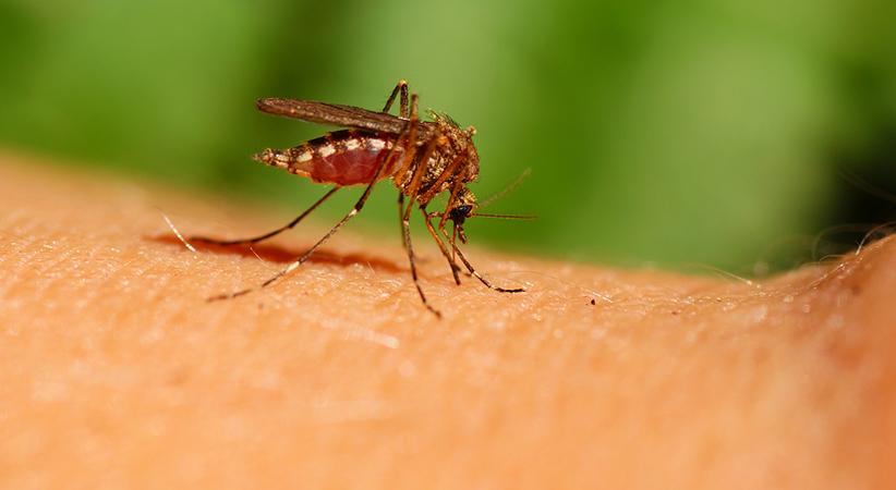 mosquito puerto rico